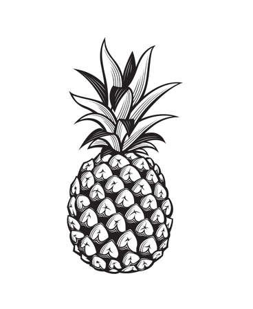 Black image of pineapple tropical fruit Stok Fotoğraf - 84263776