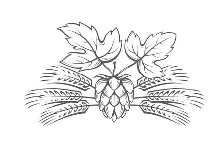 ceo: Black illustration of hop and barley ear for brewing.