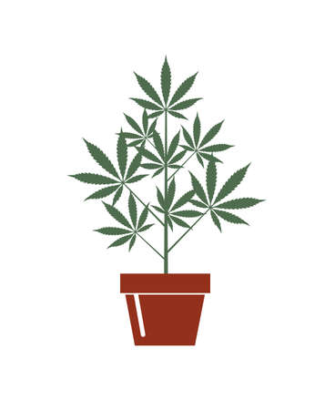 illustration of marijuana or cannabis plant in flower pot isolated on white background