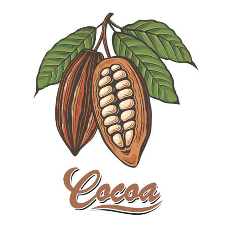color illustration with cocoa beans, branch and leaves Ilustração