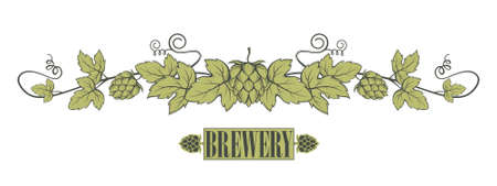 illustration of hops branch with leaves for brewing