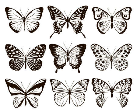 monochrome collection of butterflies isolated on white background