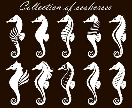 collection of seahorses isolated on black background