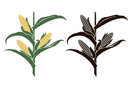 collection of corn stalk illustrations isolated on white background