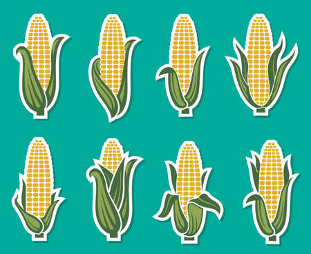 collection of corncob icons isolated on green background