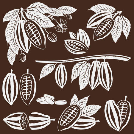 collection of cocoa beans, branch and leaves isolated on brown background