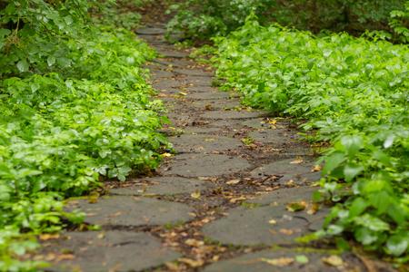 Wood stump walkway on green grass in nature garden