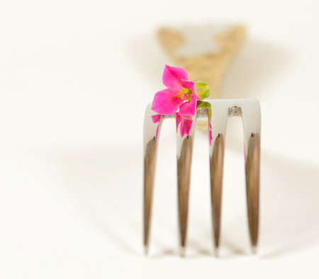 flower and fork on white background Stock Photo