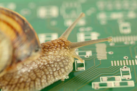 Garden Snail in slow motion on circuit board photo