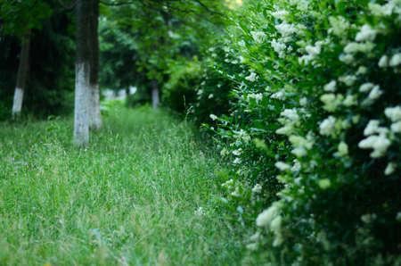 A wall Garden with bushes Zdjęcie Seryjne