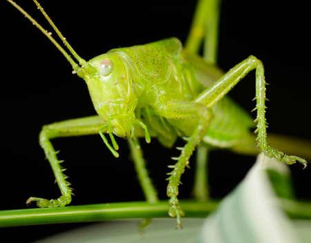 grasshopper sitting on the stem, macro