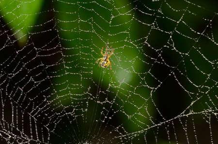 Spider spinning a web Zdjęcie Seryjne