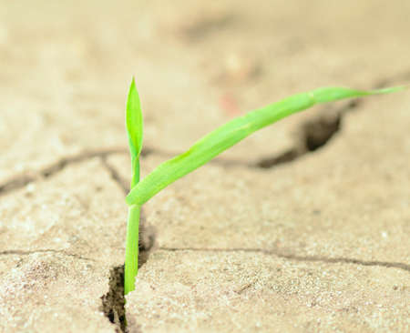 New Plant in Cracked Earth