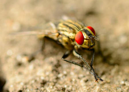 insect fly macro on a ground