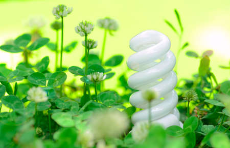 energy-saving lamp in green grass photo