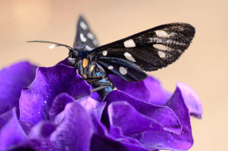 butterfly sitting on a blue flower Zdjęcie Seryjne
