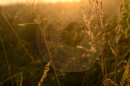 spider web surrounded by the morning mist at sunrise Zdjęcie Seryjne