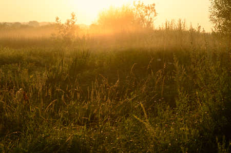 Landscape, dawn in a field photo