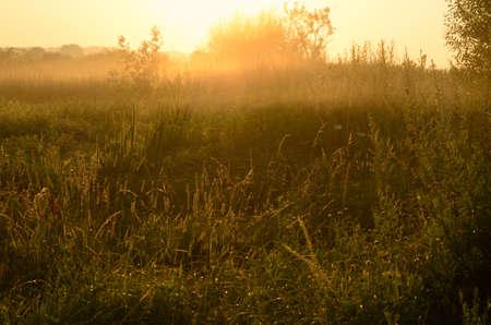 Landscape, dawn in a field Zdjęcie Seryjne