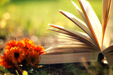 bible flower: open book with flower on grass sunset time
