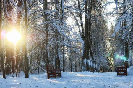 wooden brown bench in winter snowy park