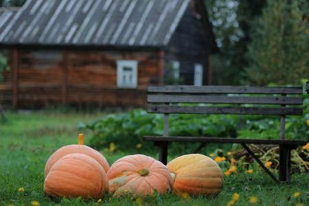 pitchfork: rural pumpkin harvest outdoor in nature autumn