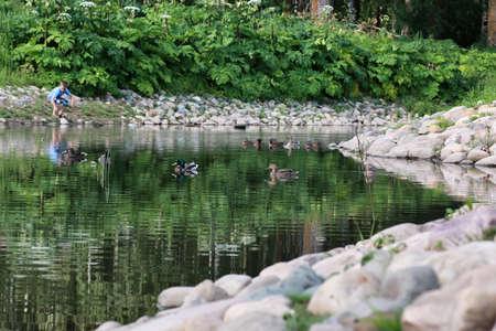 duck bird on the pond in summer season Stock Photo