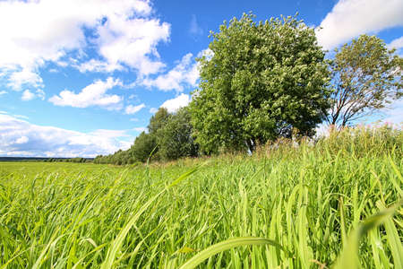 lanscape: lanscape grass meadow and sky cloud in summer Stock Photo