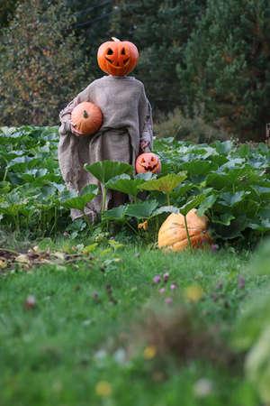 espantapajaros: chica con una calabaza tallada en su cabeza para Halloween