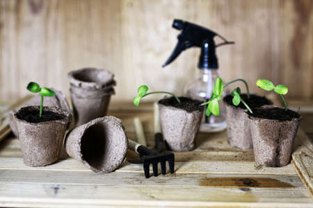 peat pot: preparations for the new summer season preparation plant seedlings and courting her