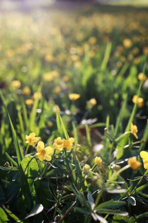 first fresh sprouts spring meadow flowers on a sunny day Stock Photo