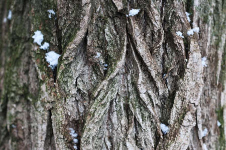 manifestations: Winter in all its manifestations snow-covered streets of trees and lawn