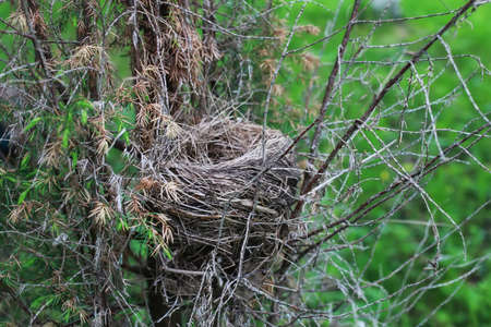 birdnest: retinue of grass and small twigs of the tree nest tiny birds and eggs in it Stock Photo