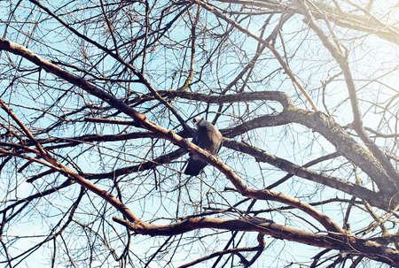 disordered: birds nest against sky on the bare tree