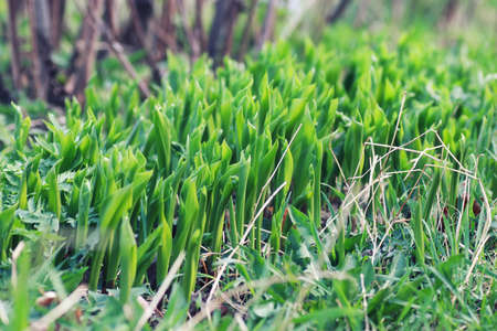 spring grass and flower in a field Stock Photo
