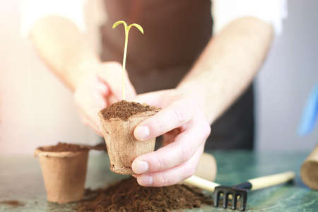 horticulture and the process of preparation prepended seedlings for the new season