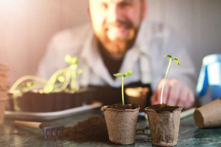 peat pot: horticulture and the process of preparation prepended seedlings for the new season
