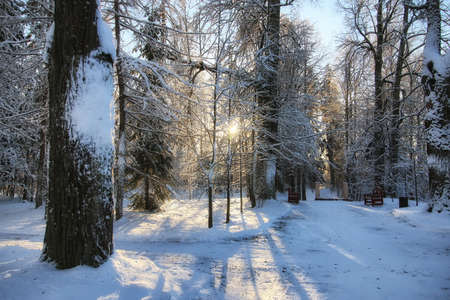 sweden winter: various objects of the winter season and lanscape in the best of this wonderful period