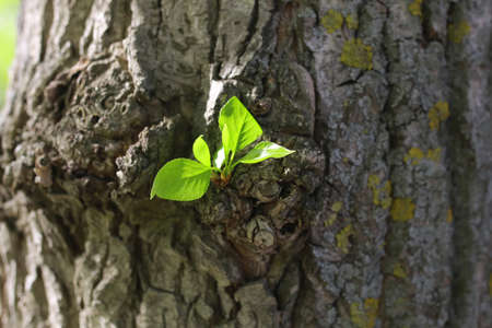 spring leaf: various objects of the spring season in the best of this wonderful period Stock Photo