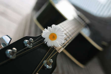ballad: guitar acoustic black glossy six-string playing in nature