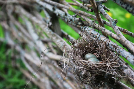 bird nest in nature Stock Photo