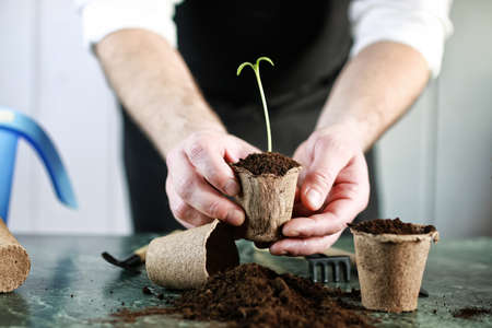 peat pot: gardener hand sprout table Stock Photo