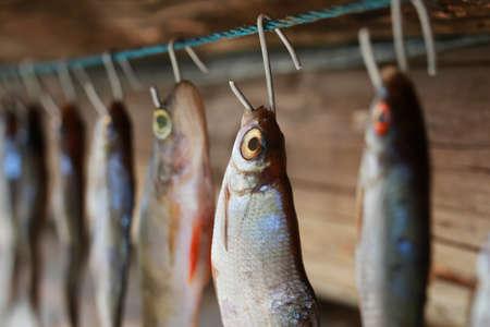 stockfish: fish drying on rope Stock Photo