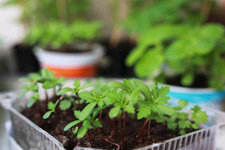 peat pot: plant new pot garden Stock Photo