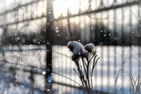 frozenned: lanscape snow grass macro tree winter