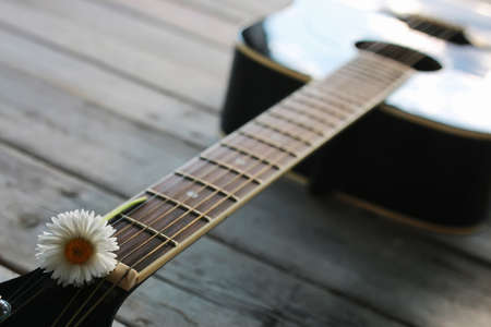 guitar string daisy Stok Fotoğraf - 74891720