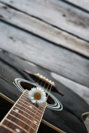 guitar string daisy Stok Fotoğraf - 74891722