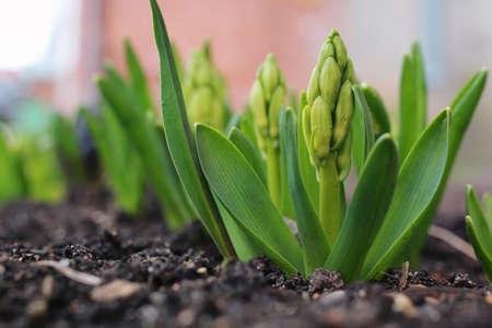 Fleur de printemps blanc Banque d'images - 75497236