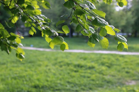 park in the city, young sprouts of trees in spring