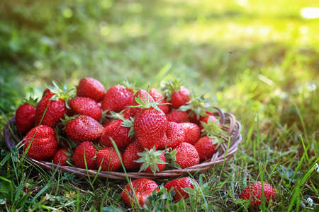 desk: delicious fresh ripe and fragrant strawberries in a basket of wicker Sprig